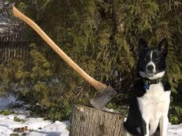 wooddog